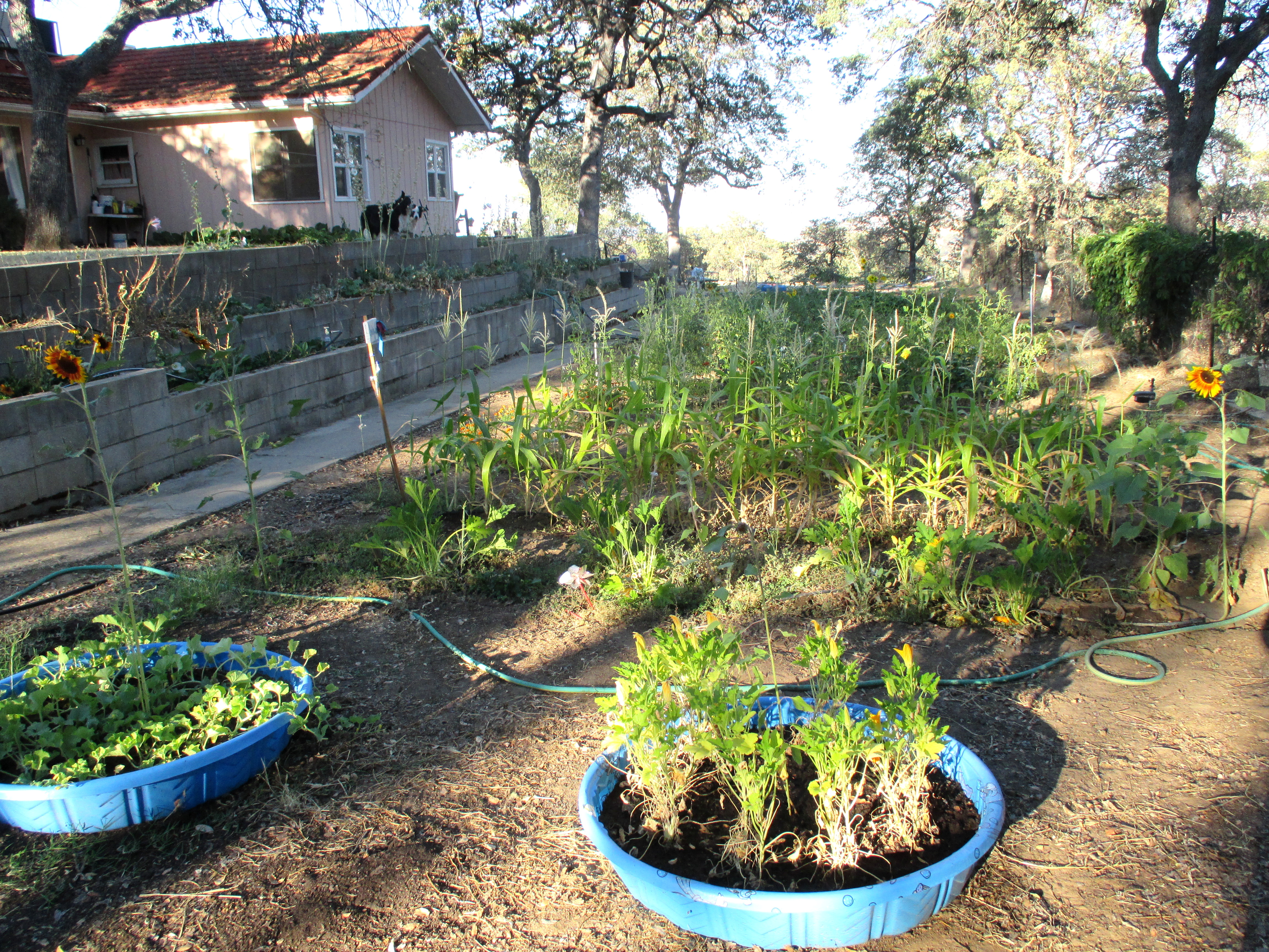Our garden, August 2013